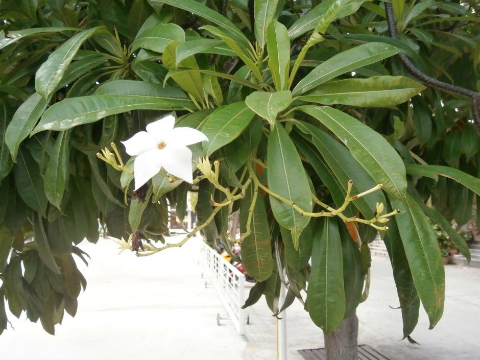 Auch Das Gibt Es Der Baum Fur Lebensmude Thailand Pattaya